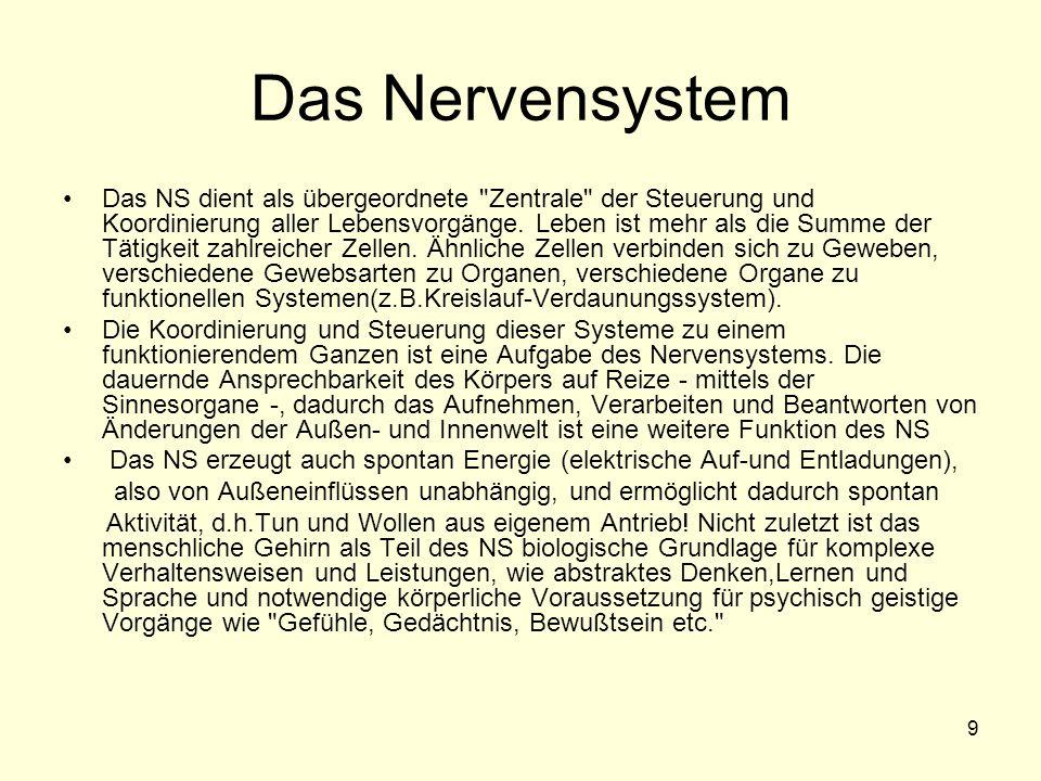 9 Das Nervensystem Das NS dient als übergeordnete Zentrale der Steuerung und Koordinierung aller Lebensvorgänge.
