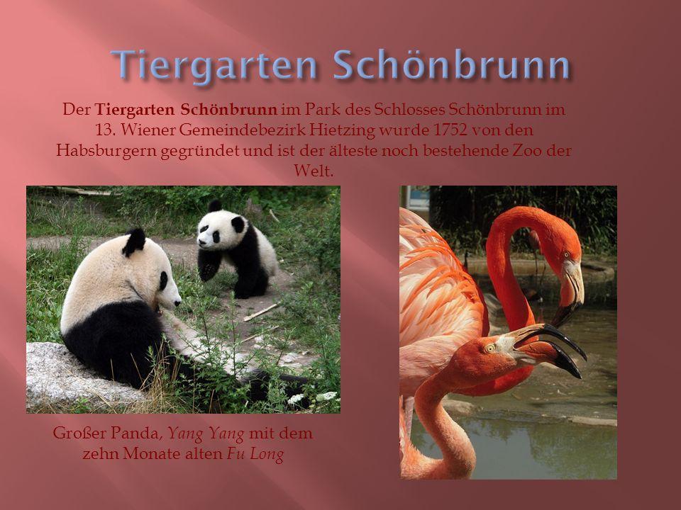 Der Tiergarten Schönbrunn im Park des Schlosses Schönbrunn im 13.