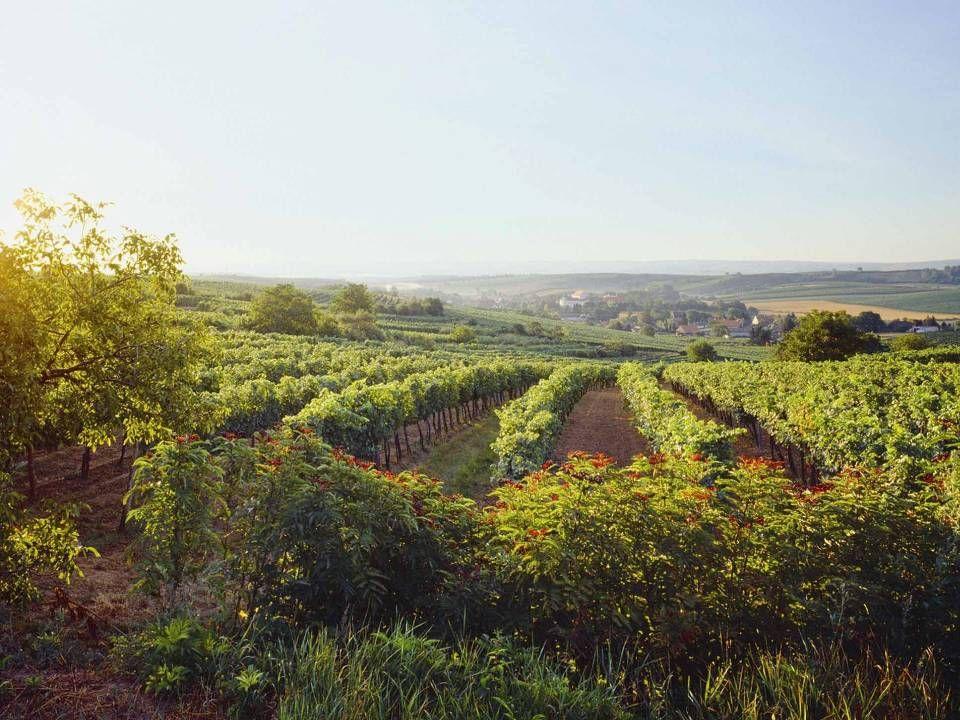 Mailberg Mailberg liegt im nordöstlichen Niederösterreich und ist durch ihre hervorragenden Weinlagen bekannt, die sich in der Vinothek des Schlosses und dem jährlich stattfindenden großen Kellergassenfest niederschlagen.