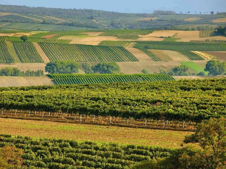 In der idyllischen Kellergasse vonPillichsdorf unweit der Stadtgrenze zu Wien, beginnt die Rundreise durch das Weinviertel