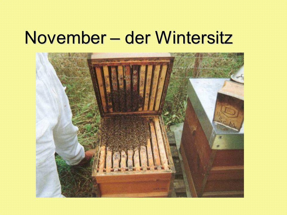 November – der Wintersitz