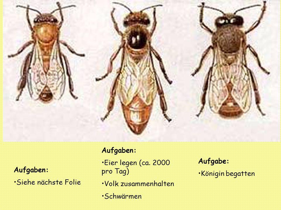 3.Das Bienenjahr 3.