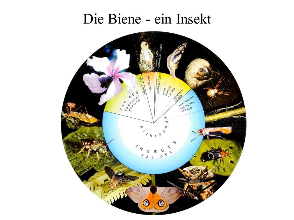 Spätsommer & Herbst - Brutgeschäft geht zurück: Mitte August ca.