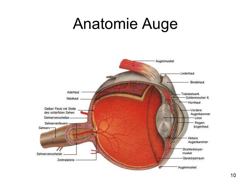 10 Anatomie Auge