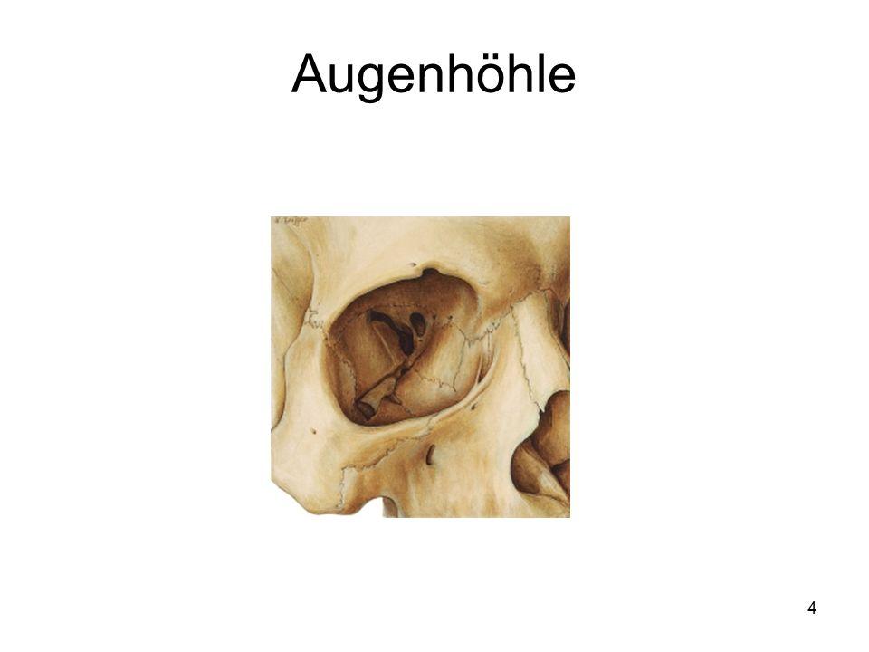 85 Anatomische und physiologische Aspekte Der Geruchsinn ist im Riechepithel der Nasenschleimhaut lokalisiert.