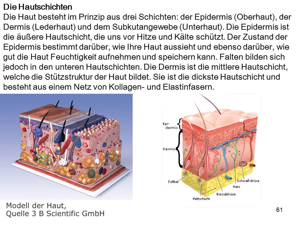 61 Die Hautschichten Die Haut besteht im Prinzip aus drei Schichten: der Epidermis (Oberhaut), der Dermis (Lederhaut) und dem Subkutangewebe (Unterhau