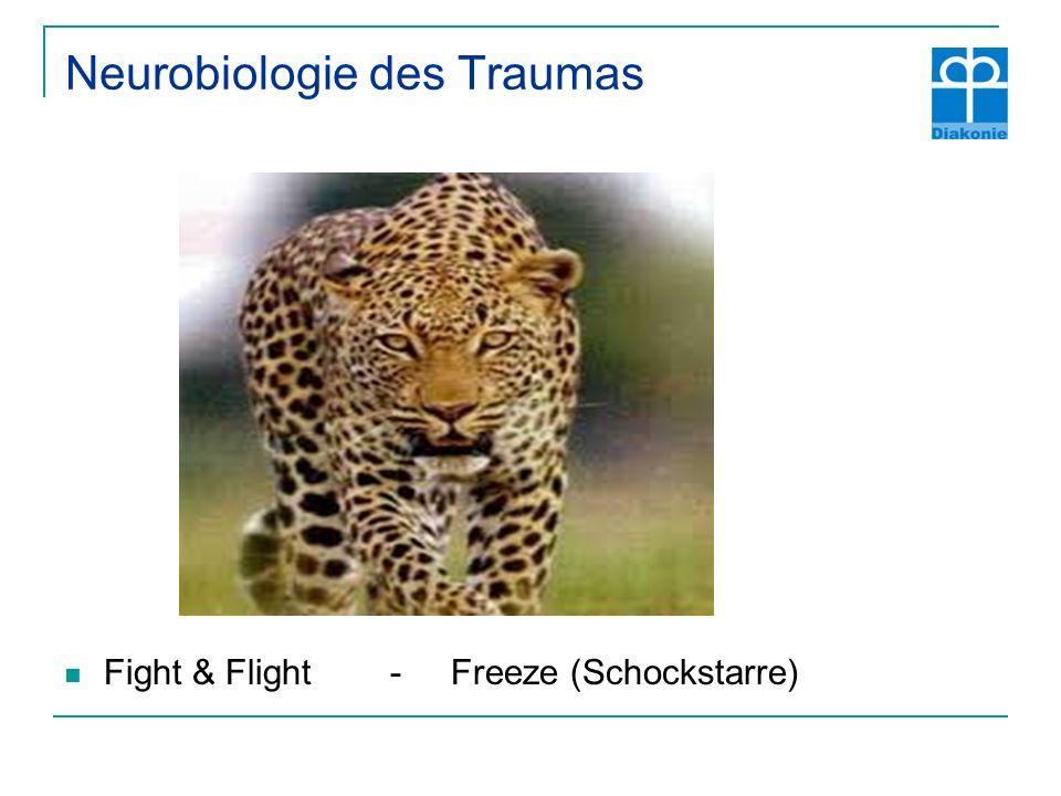 Neurobiologie des Traumas Fight & Flight - Freeze (Schockstarre)