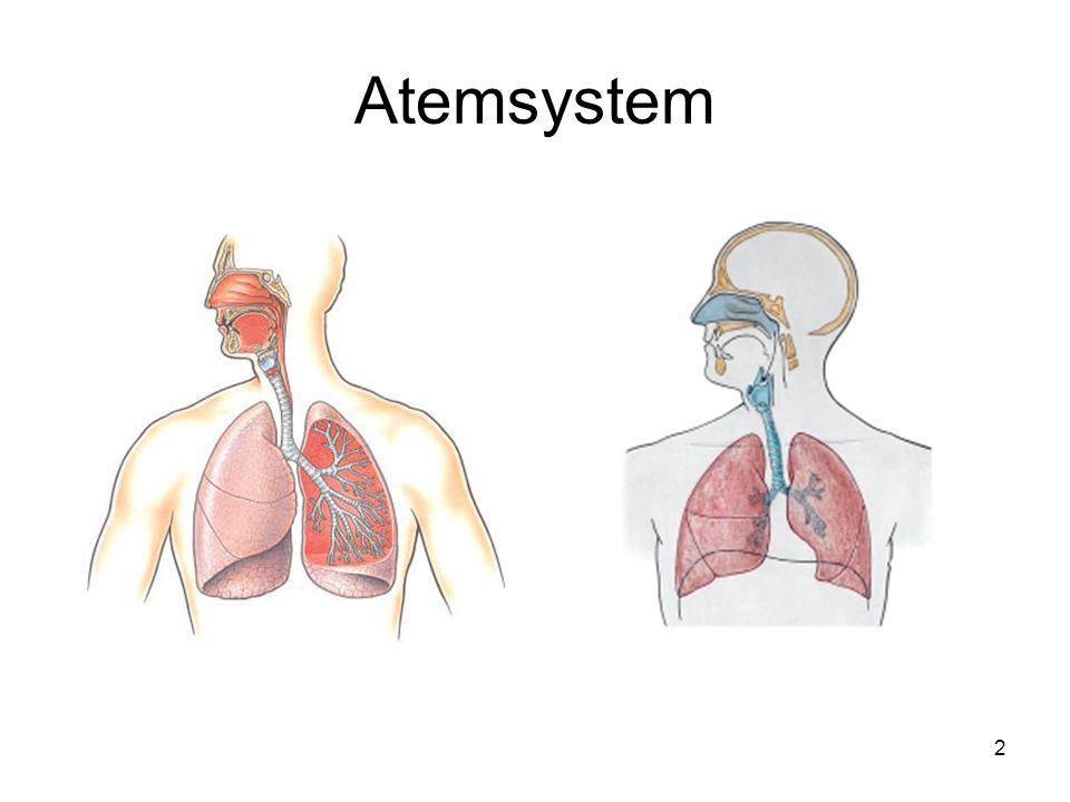 2 Atemsystem