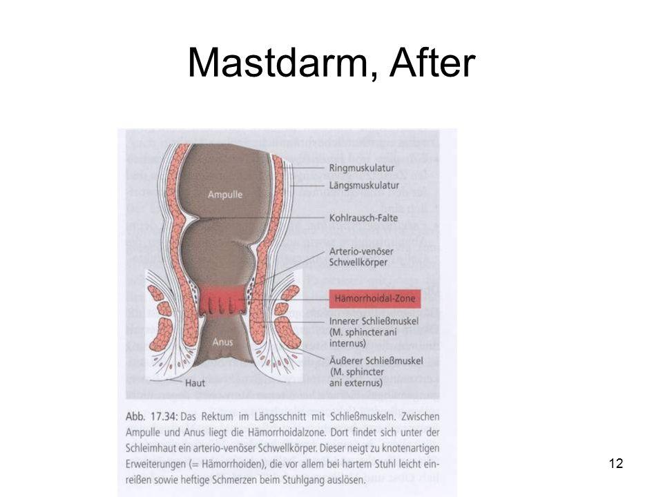 12 Mastdarm, After