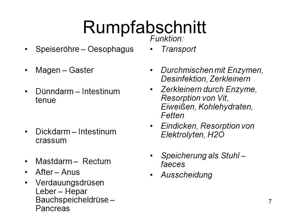 Nett Verdauungssystem Funktion Ideen - Anatomie und Physiologie des ...