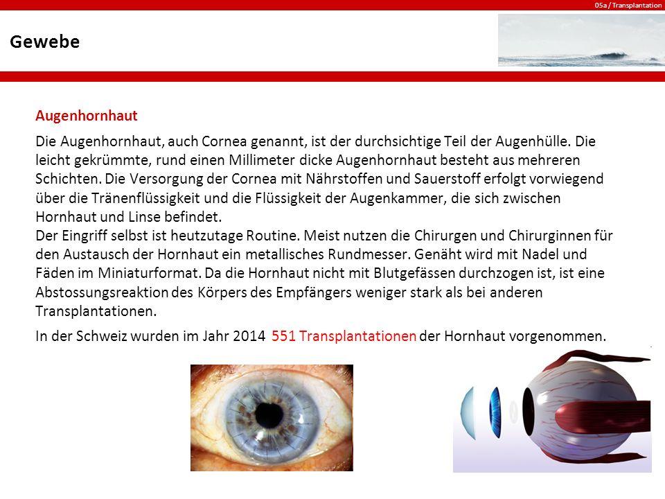 05a / Transplantation Gewebe Augenhornhaut Die Augenhornhaut, auch Cornea genannt, ist der durchsichtige Teil der Augenhülle.
