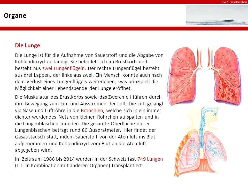 05a / Transplantation Organe Die Lunge Die Lunge ist für die Aufnahme von Sauerstoff und die Abgabe von Kohlendioxyd zuständig.