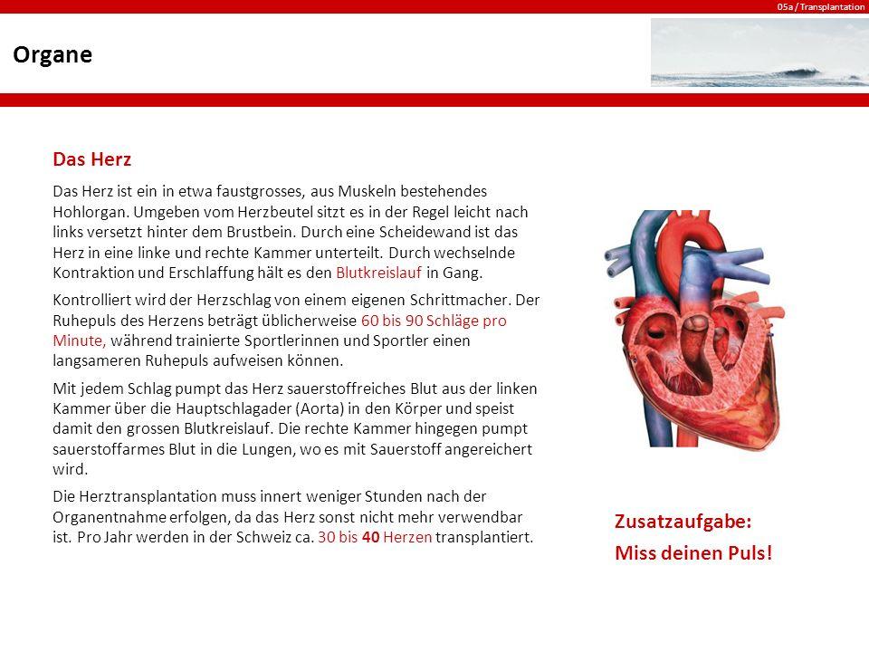 05a / Transplantation Organe Das Herz Das Herz ist ein in etwa faustgrosses, aus Muskeln bestehendes Hohlorgan.