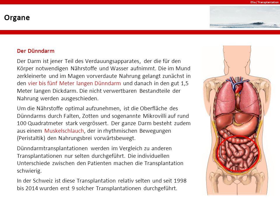 05a / Transplantation Organe Der Dünndarm Der Darm ist jener Teil des Verdauungsapparates, der die für den Körper notwendigen Nährstoffe und Wasser aufnimmt.