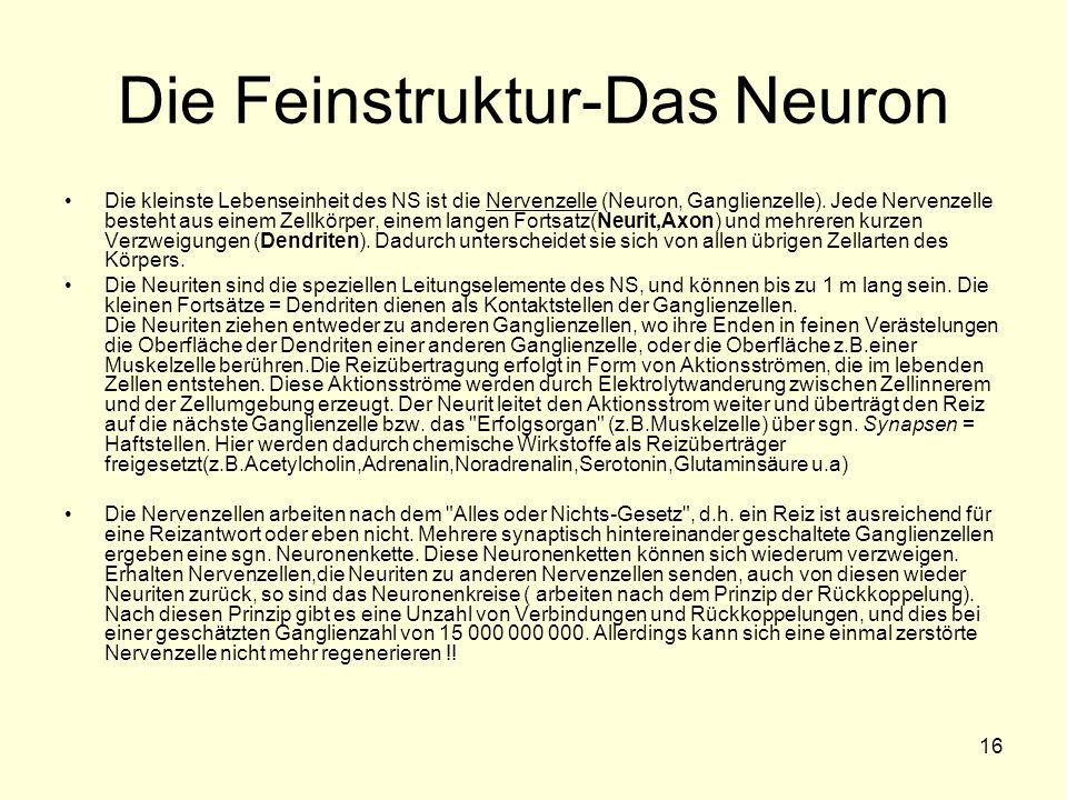 16 Die Feinstruktur-Das Neuron Die kleinste Lebenseinheit des NS ist die Nervenzelle (Neuron, Ganglienzelle). Jede Nervenzelle besteht aus einem Zellk