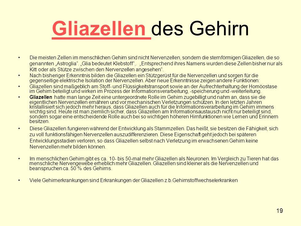 19 Gliazellen Gliazellen des Gehirn Die meisten Zellen im menschlichen Gehirn sind nicht Nervenzellen, sondern die sternförmigen Gliazellen, die so ge