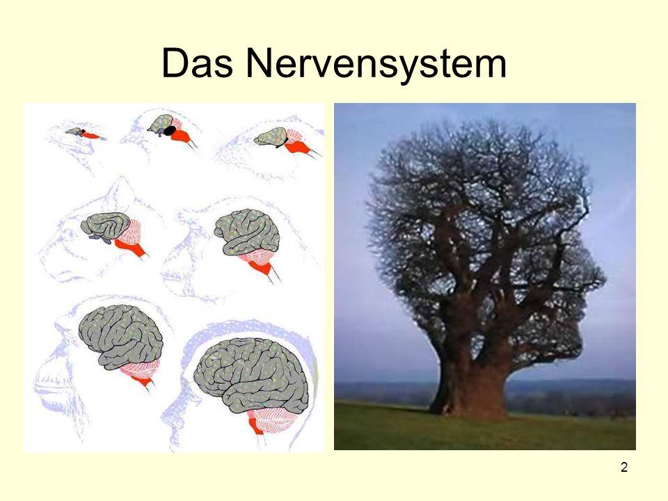 2 Das Nervensystem