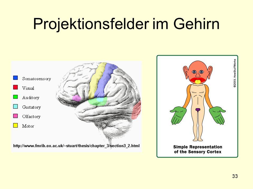 33 Projektionsfelder im Gehirn