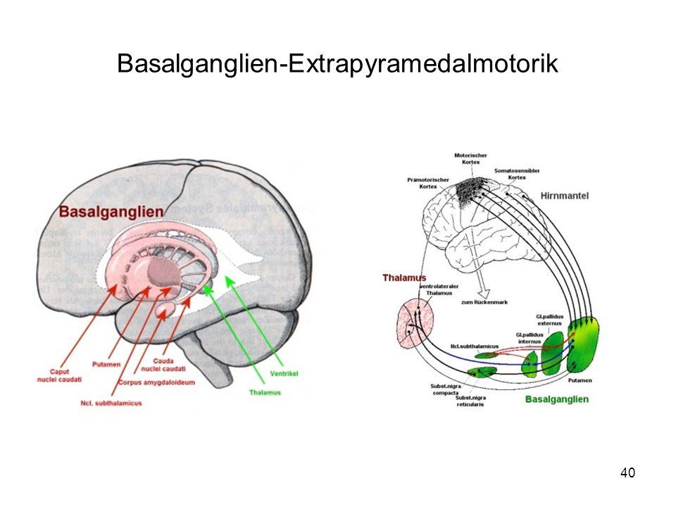 40 Basalganglien-Extrapyramedalmotorik