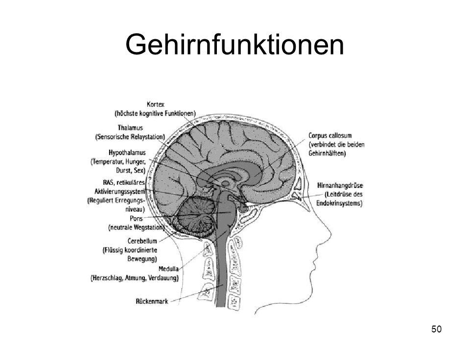 50 Gehirnfunktionen