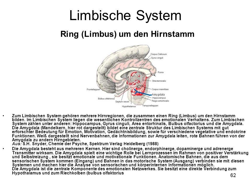 62 Limbische System Ring (Limbus) um den Hirnstamm Zum Limbischen System gehören mehrere Hirnregionen, die zusammen einen Ring (Limbus) um den Hirnsta
