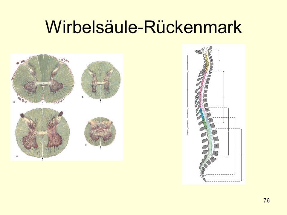 76 Wirbelsäule-Rückenmark