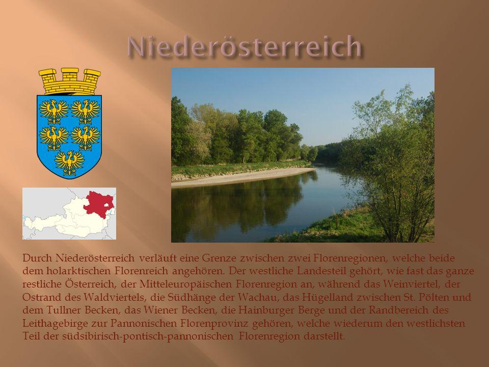 Durch Niederösterreich verläuft eine Grenze zwischen zwei Florenregionen, welche beide dem holarktischen Florenreich angehören. Der westliche Landeste