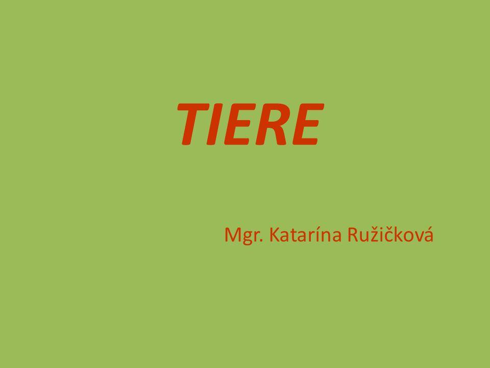 TIERE Mgr. Katarína Ružičková