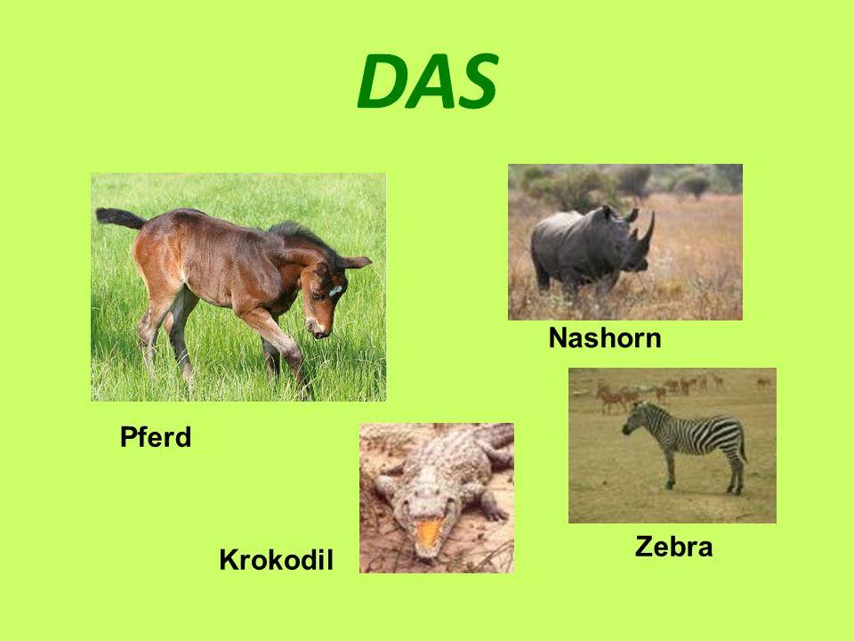 DAS Pferd Nashorn Krokodil Zebra