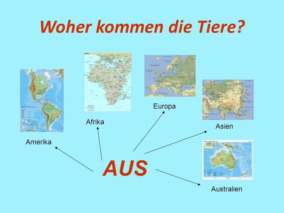 Woher kommen die Tiere? Amerika Afrika Europa Asien Australien AUS