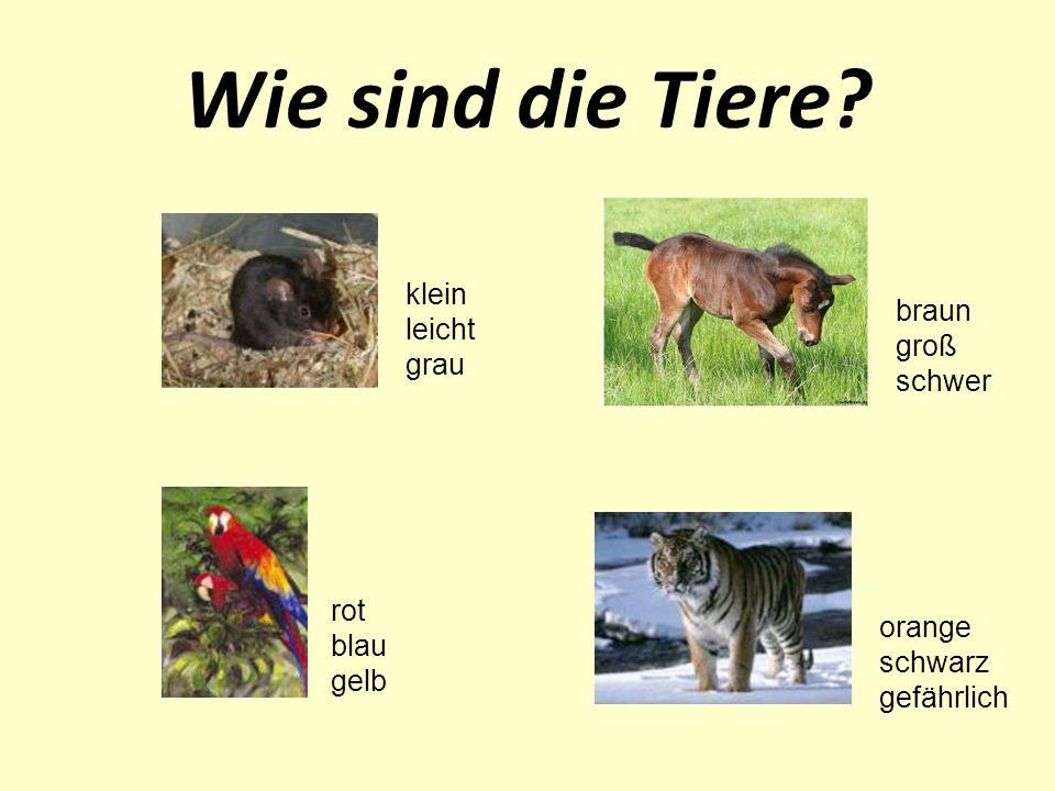 Wie sind die Tiere? klein leicht grau braun groß schwer rot blau gelb orange schwarz gefährlich