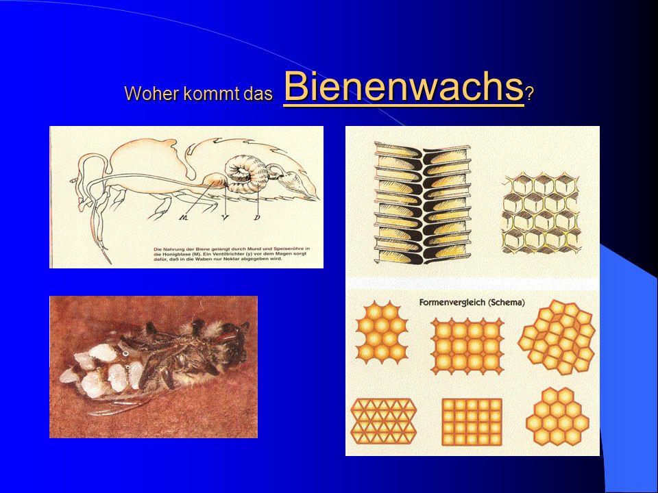 Woher kommt das Bienenwachs ?