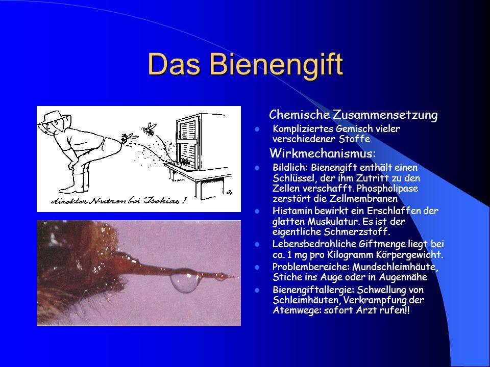 Das Bienengift Chemische Zusammensetzung Kompliziertes Gemisch vieler verschiedener Stoffe Wirkmechanismus: Bildlich: Bienengift enthält einen Schlüss