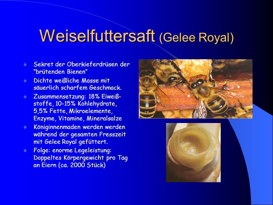 """Weiselfuttersaft (Gelee Royal) Sekret der Oberkieferdrüsen der """"brütenden Bienen"""" Dichte weißliche Masse mit säuerlich scharfem Geschmack. Zusammenset"""