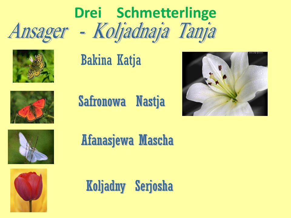 Drei Schmetterlinge Bakina Katja Safronowa Nastja Afanasjewa Mascha Koljadny Serjosha