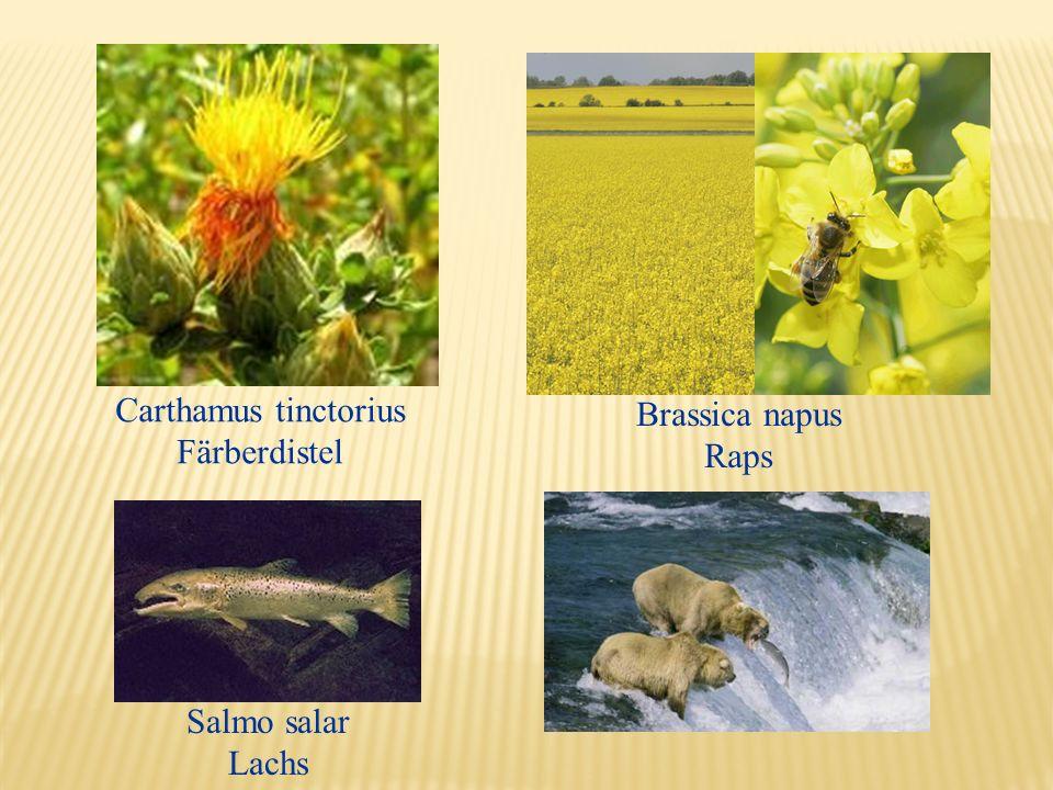 Carthamus tinctorius Färberdistel Brassica napus Raps Salmo salar Lachs