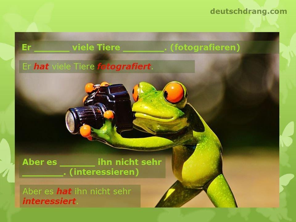 Er ______ viele Tiere _______. (fotografieren) Er hat viele Tiere fotografiert. Aber es hat ihn nicht sehr interessiert. Aber es ______ ihn nicht sehr