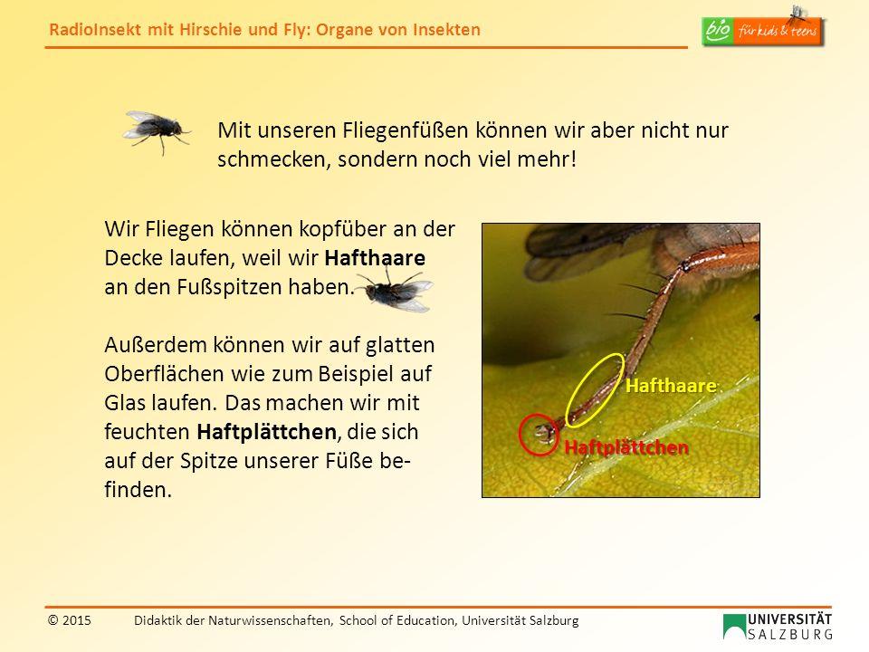RadioInsekt mit Hirschie und Fly: Organe von Insekten © 2015Didaktik der Naturwissenschaften, School of Education, Universität Salzburg Haftplättchen