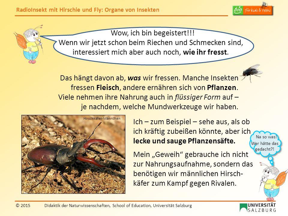 RadioInsekt mit Hirschie und Fly: Organe von Insekten © 2015Didaktik der Naturwissenschaften, School of Education, Universität Salzburg Das hängt davo