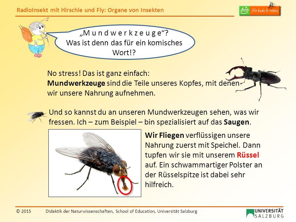 RadioInsekt mit Hirschie und Fly: Organe von Insekten © 2015Didaktik der Naturwissenschaften, School of Education, Universität Salzburg No stress! Das