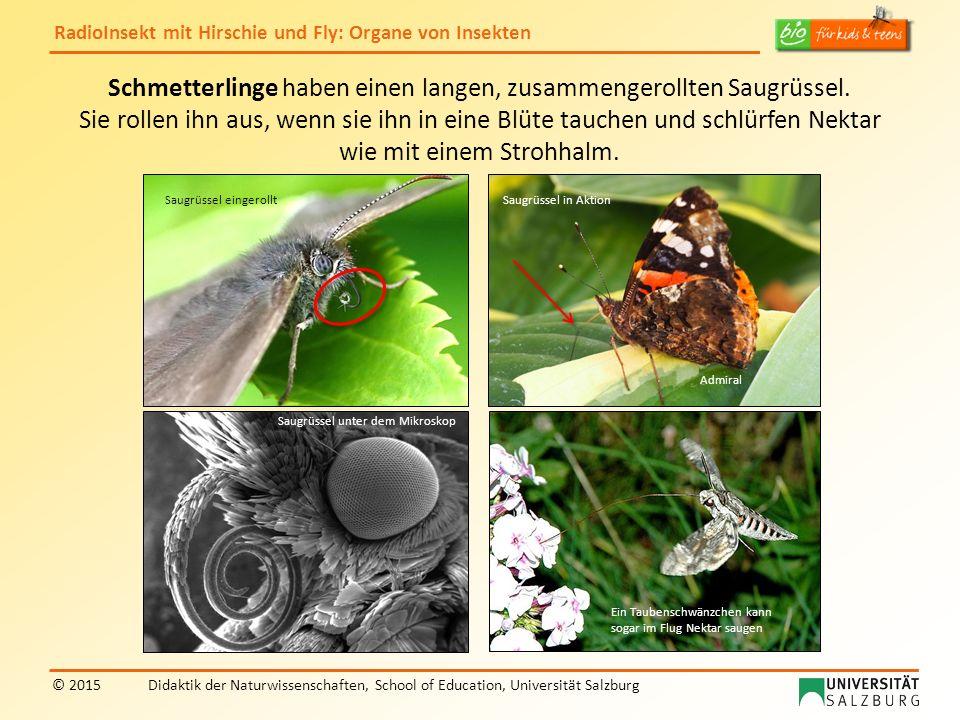 RadioInsekt mit Hirschie und Fly: Organe von Insekten © 2015Didaktik der Naturwissenschaften, School of Education, Universität Salzburg Schmetterlinge