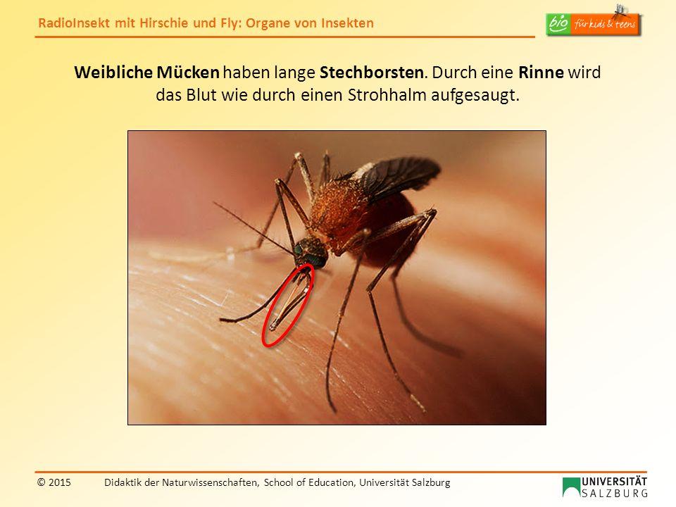 RadioInsekt mit Hirschie und Fly: Organe von Insekten © 2015Didaktik der Naturwissenschaften, School of Education, Universität Salzburg Weibliche Mück
