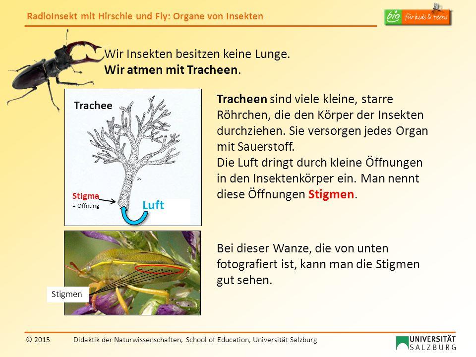RadioInsekt mit Hirschie und Fly: Organe von Insekten © 2015Didaktik der Naturwissenschaften, School of Education, Universität Salzburg Schmetterlinge haben einen langen, zusammengerollten Saugrüssel.