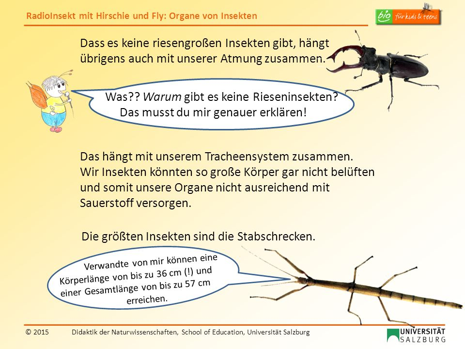 RadioInsekt mit Hirschie und Fly: Organe von Insekten © 2015Didaktik der Naturwissenschaften, School of Education, Universität Salzburg Aber nun habe ich eine andere Frage: Fly, du bist bekannt dafür, dass dir nichts entgeht.
