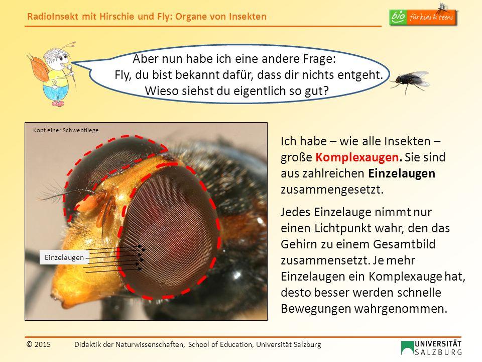 RadioInsekt mit Hirschie und Fly: Organe von Insekten © 2015Didaktik der Naturwissenschaften, School of Education, Universität Salzburg Jetzt habt ihr mich aber neugierig gemacht: Können Insekten auch hören, riechen und schmecken.