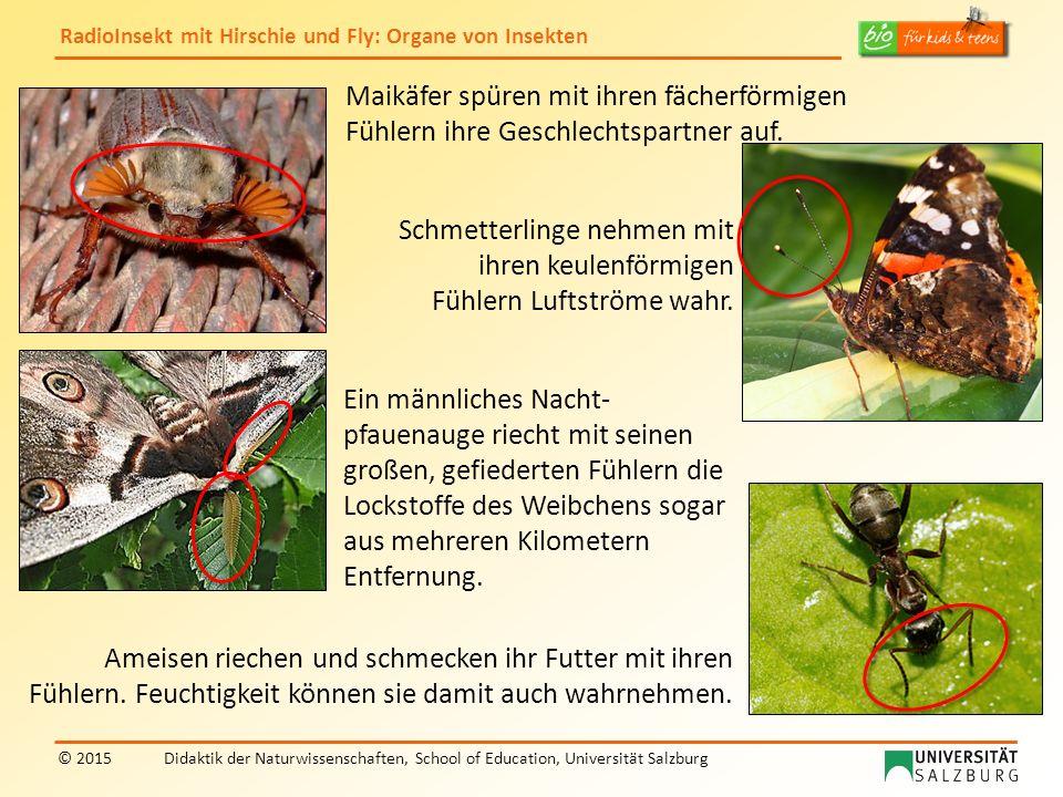 RadioInsekt mit Hirschie und Fly: Organe von Insekten © 2015Didaktik der Naturwissenschaften, School of Education, Universität Salzburg Fly, du verwendest zur Nahrungssuche deine Fühler.