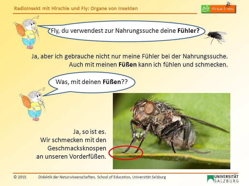 RadioInsekt mit Hirschie und Fly: Organe von Insekten © 2015Didaktik der Naturwissenschaften, School of Education, Universität Salzburg Fly, du verwen