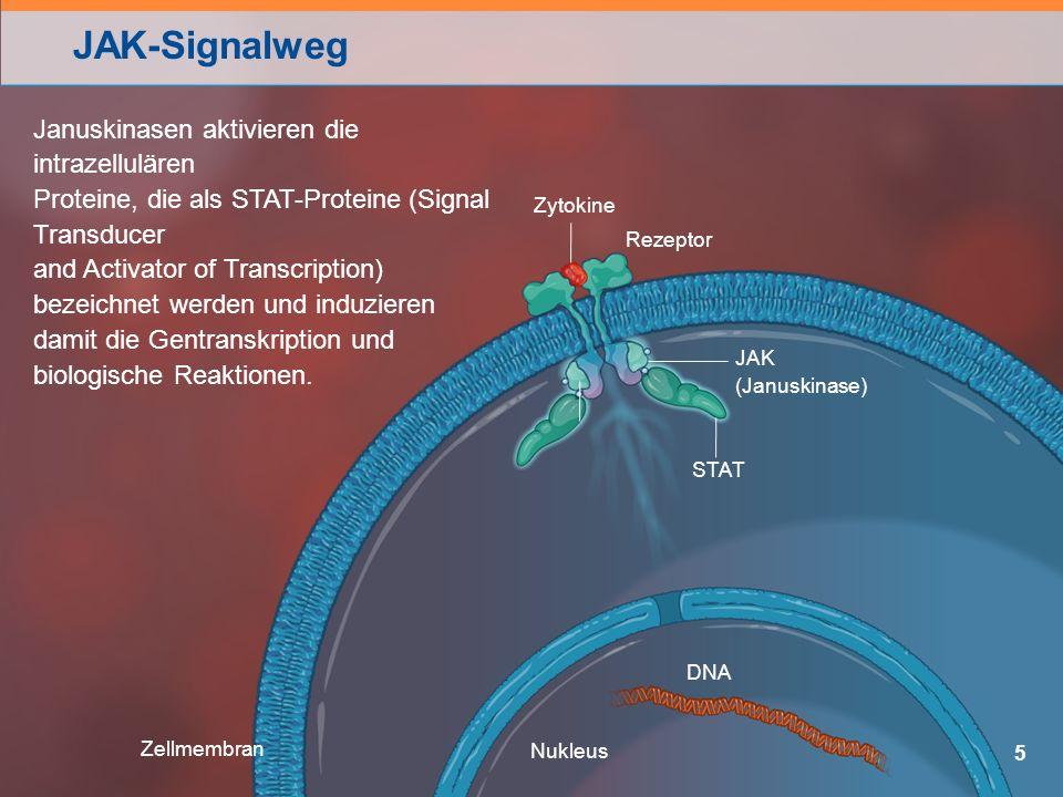 JAK-Signalweg 5 STAT Januskinasen aktivieren die intrazellulären Proteine, die als STAT-Proteine (Signal Transducer and Activator of Transcription) bezeichnet werden und induzieren damit die Gentranskription und biologische Reaktionen.