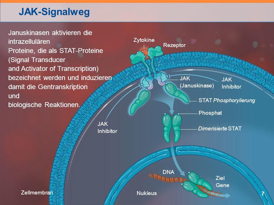 JAK-Signalweg 7 Januskinasen aktivieren die intrazellulären Proteine, die als STAT-Proteine (Signal Transducer and Activator of Transcription) bezeichnet werden und induzieren damit die Gentranskription und biologische Reaktionen.