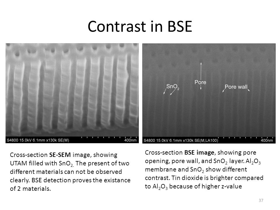 Contrast in BSE Cross-section BSE image, showing pore opening, pore wall, and SnO 2 layer. Al 2 O 3 membrane and SnO 2 show different contrast. Tin di
